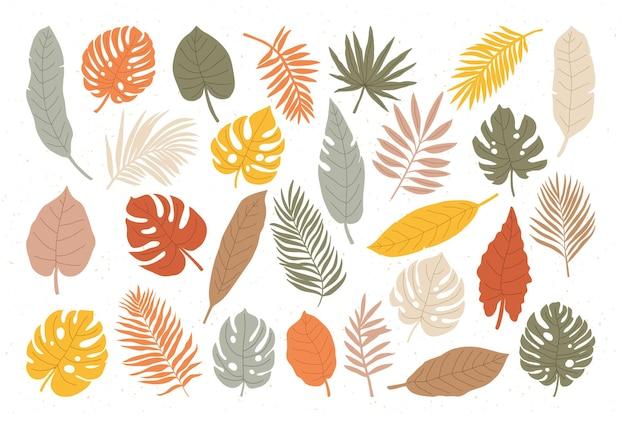 Grande insieme di diverse foglie tropicali su sfondo bianco