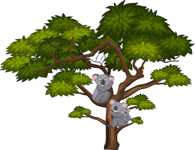 Grande albero e koala carino