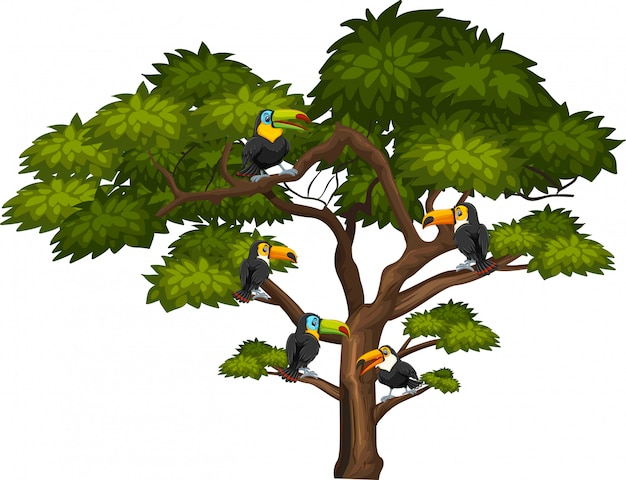 Grande albero e molti uccelli tucano su bianco