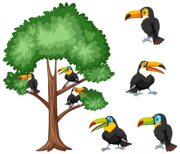 Grande albero e uccelli tucano