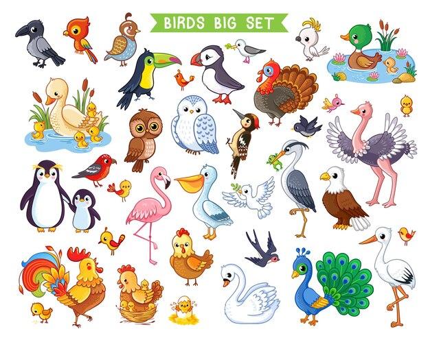 Grande set vettoriale con uccelli in stile cartone animato
