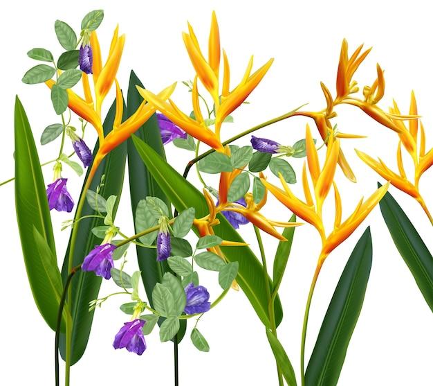 Uccelli del paradiso e fiori di pisello farfalla