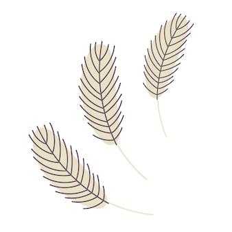 Piuma di uccelli isolata su uno sfondo bianco