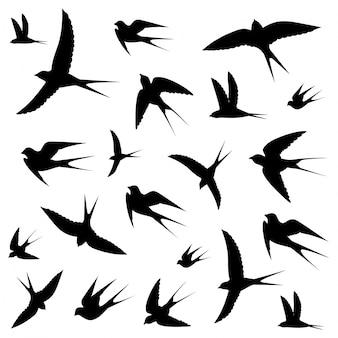 Icone di uccelli