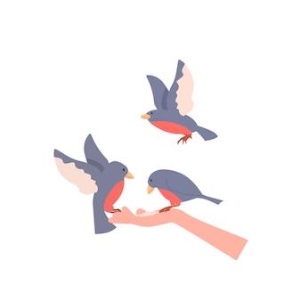 Gli uccelli si siedono sul braccio tenendo il cibo