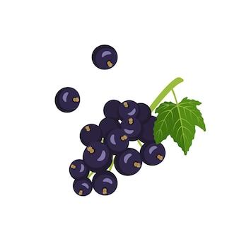 Icona di ribes nero. una fonte di vitamina c. piccoli frutti di bosco su un ramo con una foglia, raccolto estivo