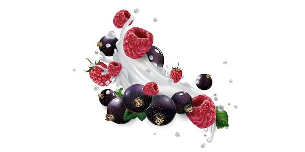 Ribes nero e lamponi e una spruzzata di yogurt o latte su uno sfondo bianco.