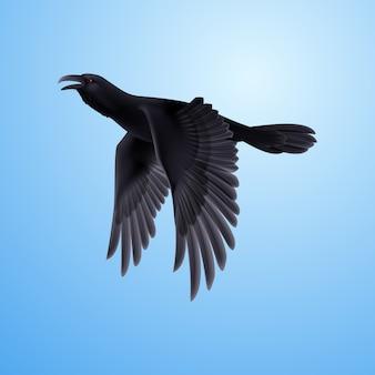 Corvo nero su blu