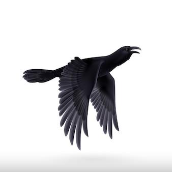 Corvo nero su sfondo bianco