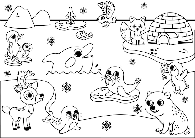 Animali artici in bianco e nero orso polare foca tricheco gufo pinguini volpe renna balena