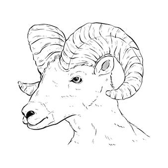 Testa di corno di capra in bianco e nero con disegno a mano o stile schizzo