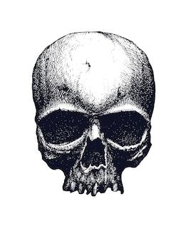 Cranio umano bianco e nero