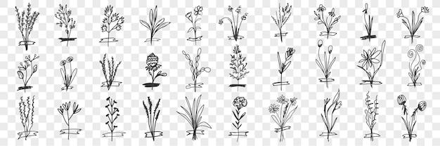 Insieme di doodle di piante fiorite.