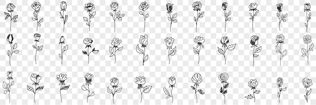 Insieme di doodle di fiori di rosa in fiore