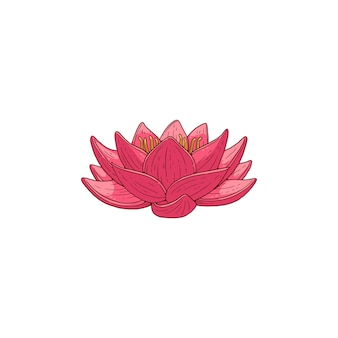 Fiore rosa fiore di loto, fumetto illustrazione su bianco