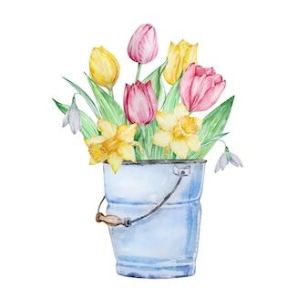 Secchio blu con tulipani isolati su bianco