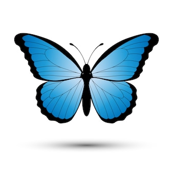 Farfalla blu isolato su uno sfondo bianco.
