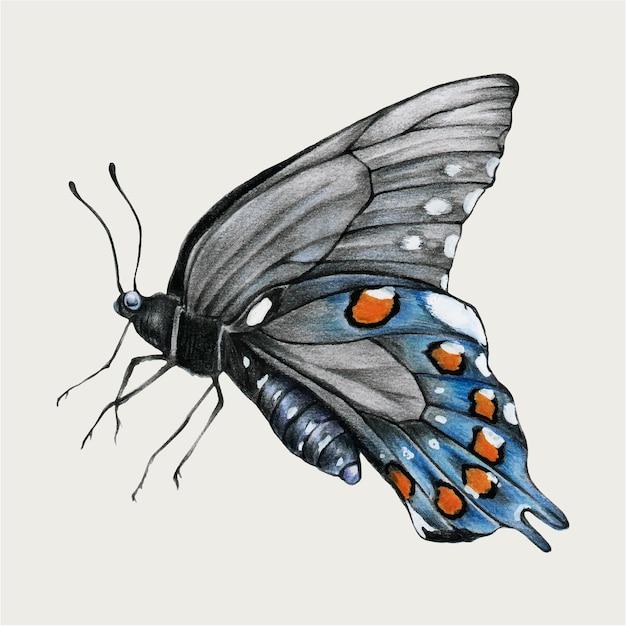 Vettore disegnato a mano dell'annata di vettore della farfalla blu