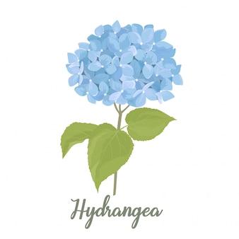 Illustrazione blu del fiore dell'ortensia nello stile dell'acquerello