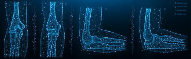 Illustrazione poligonale blu dell'articolazione del gomito, vista posteriore, anteriore, laterale e mediale