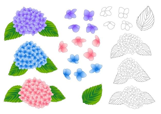 Blue purple pink hydrangea outline
