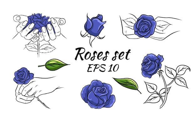 Set di rose blu. rose nelle mani, boccioli. rose blu e gambo di linea.