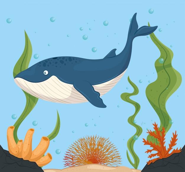 Balena blu e vita marina nell'oceano, abitanti del mondo del mare, simpatiche creature sottomarine, fauna sottomarina