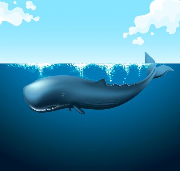 Nuoto della balena blu nell'oceano Vettore Premium