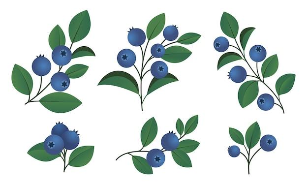 Rami di mirtillo isolati su sfondo bianco elementi vegetali per il design