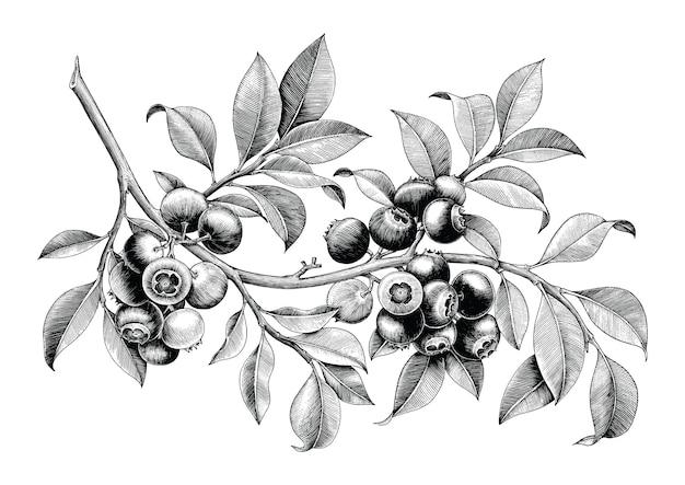 Mano del mirtillo che disegna l'isolato d'annata di clipart su fondo bianco