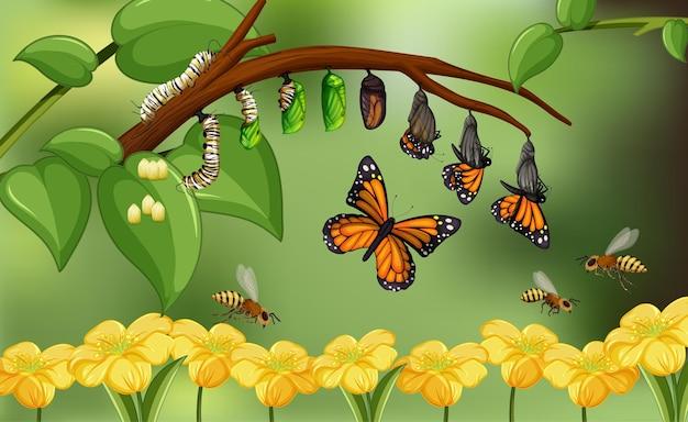 Natura blured con ciclo di vita della farfalla