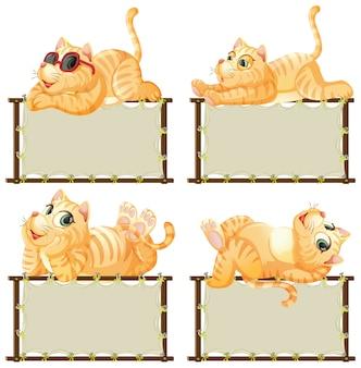 Modello del bordo con il gattino sveglio su fondo bianco
