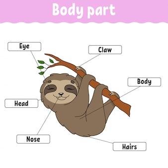 Parte del corpo.