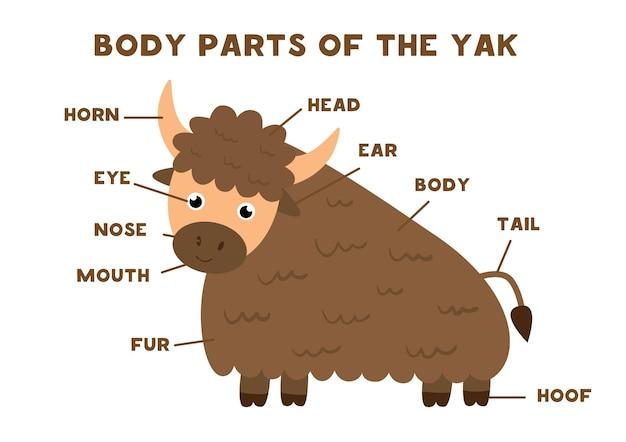Parti del corpo del simpatico yak. anatomia degli animali