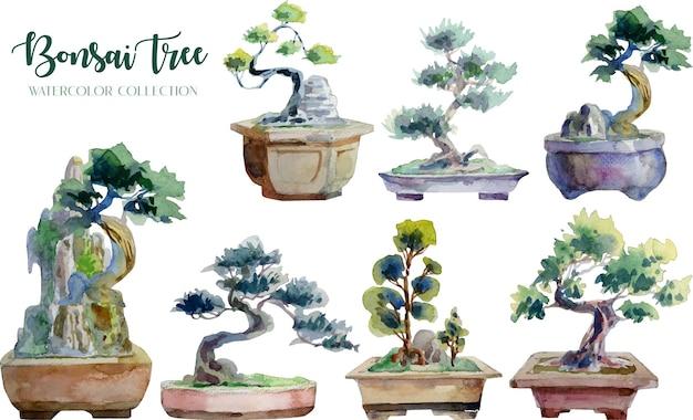 Collezione di acquerelli di bonsai e vaso.