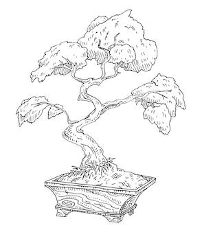 Albero di bonsai in vaso di legno vintage vettore incisione nero illustrazione monocromatica isolato su bianco