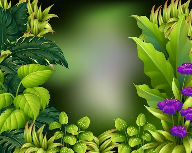 Disegno del bordo con foglie verdi