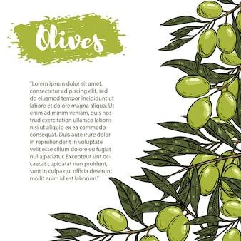 Bordo con olive colorate. il modello con spazio per il testo. per flyer, libretto per pubblicità e.