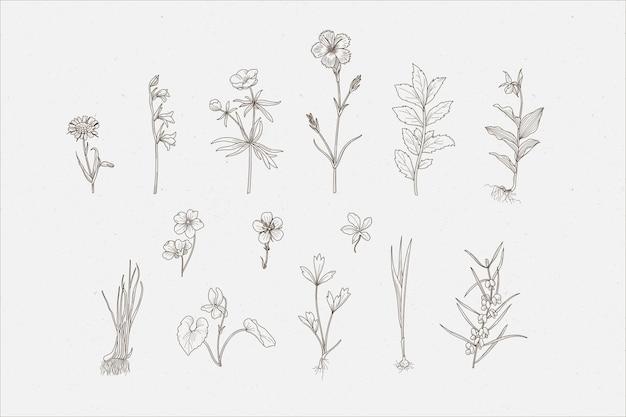 Erbe botaniche e fiori selvatici Vettore Premium