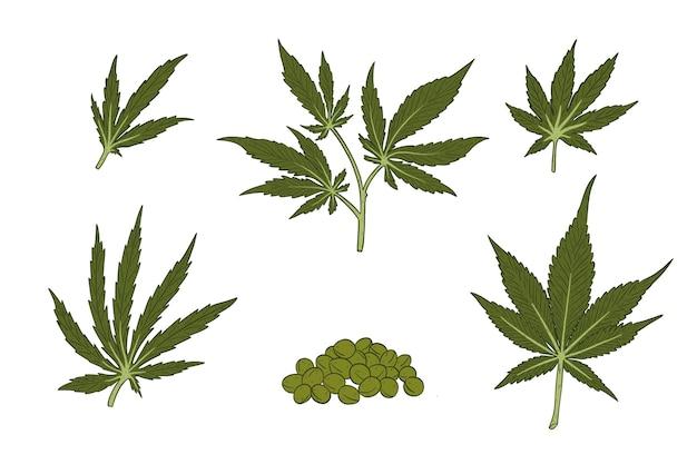 Set di foglie di cannabis botanica
