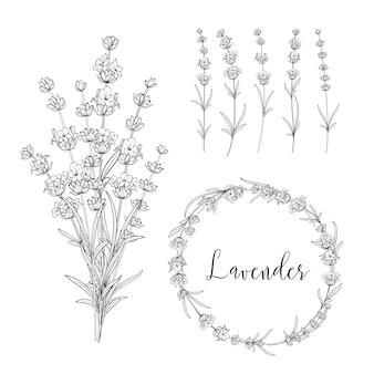 Bundle di illustrazione botanica.
