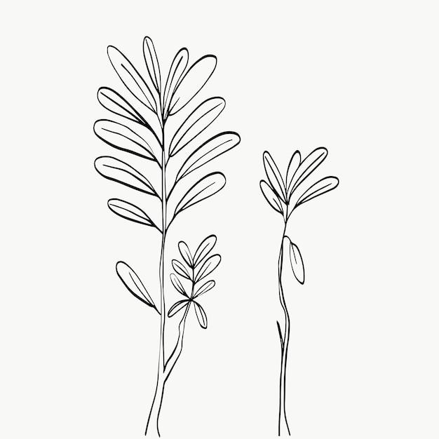 Foglie botaniche linea arte astratta moderna o minimale linea di piante perfette per l'arredamento della casa come