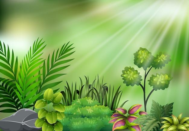 Vista della pianta botanica sulla luce del sole