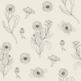 Modello senza cuciture botanico con pianta di calendula in fiore, capolini tagliati e boccioli disegnati a mano con linee di contorno.