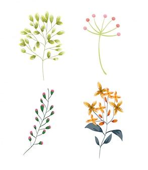 Progettazione della natura della vegetazione della vegetazione del fogliame dei fiori e dei rami