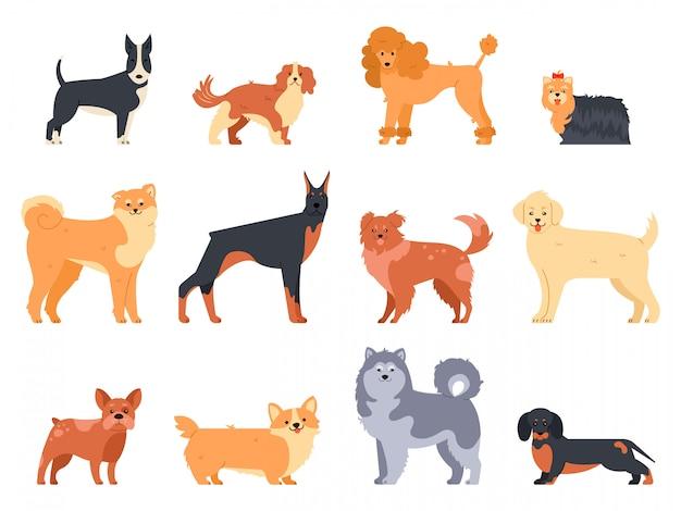 Razze di cani cane doberman, alaskan malamute, simpatico bulldog e akita. gruppo di icone di razza dell'illustrazione del carattere del doggy di razza messe. pacco di animali del fumetto di stile