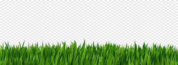 Confine di erba realistico verde brillante isolato su trasparente.