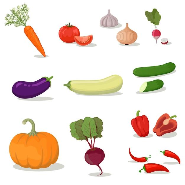 Illustrazione vettoriale brillante di verdure colorate. verdura organica fresca del fumetto isolata su fondo bianco usata per la rivista, il libro, il manifesto, la carta, la copertura del menu, le pagine web.