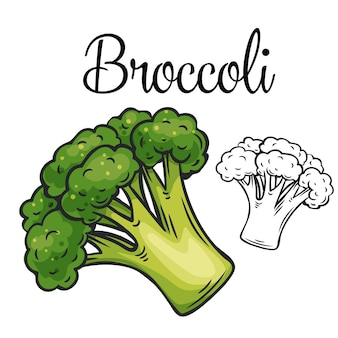Icona di disegno di broccoli