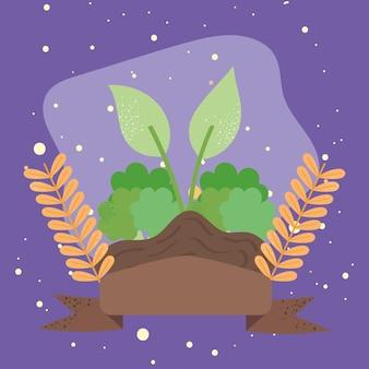 Coltivazione di broccoli freschi